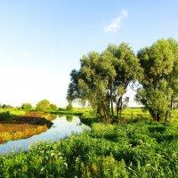 На загородной речке :: Андрей Снегерёв