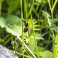 Муравьиная матка в поисках места для муравейника. :: Алена Малыгина