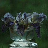 После ливня :: veilins veilins