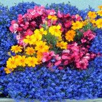 Городские цветы, клумба :: veera (veerra)