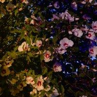 день переходящий в вечер :: Роза Бара