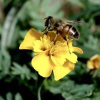 С цветка на цветок... :: Тамара (st.tamara)