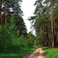 Этим летом безлюдны дороги... :: Лесо-Вед (Баранов)