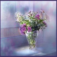 полевые цветы :: Виктория Колпакова