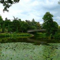 Летом в парке :: Nina Yudicheva
