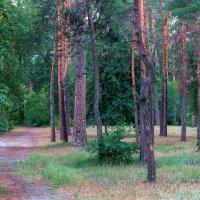 Дарницкий лес :: Сергей Бочаров