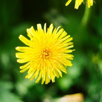 Цветы :: Александр Гладких