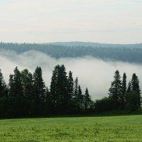 Утренний туман :: Александр Гладких