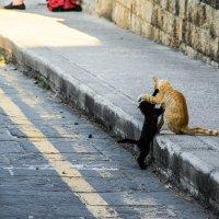 Cats :: Дмитрий Чулков