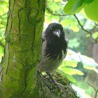 Сидит на дереве ворона и молча ждёт чего-то :: Маргарита Батырева