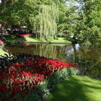Парк цветов Кёкенкоф, Нидерланды :: Владимир Леликов