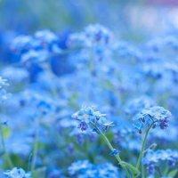 Blue :: Анна