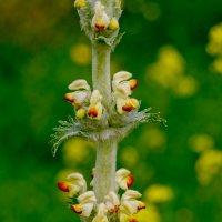 plant :: A.M. Photo