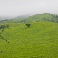 Зеленые холмы. :: Мила