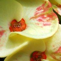 Холон. Сад кактусов. :: Надя Кушнир