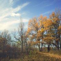 заисовка про осень :: Paul B.
