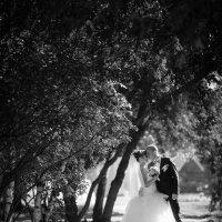свадебный полдень :: александр лебеденко