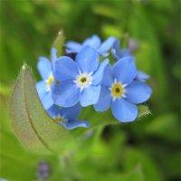 Краски весны :: spm62 Baiakhcheva Svetlana