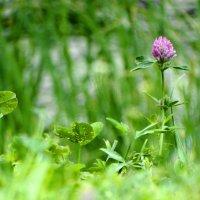 июльские травы :: Михаил Жуковский