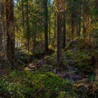 Весна в заповедном лесу. :: Владимир Лазарев