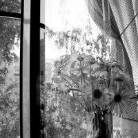 Утро. Сижу на кухне я.... :: Валерия  Полещикова