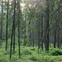 В лесной чаще :: Aнна Зарубина