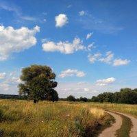 Упасть бы в траву луговую :: Роман Кривеженко