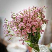 Цветики-цветочки :: Анатолий Шулков