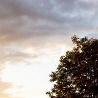 Вечернее небо :: Алиса Нелеп