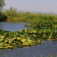 Озеро у Успенского Второафонского Бештаугорского мужского монастыря. г. Бештау, 1000 м. :: Vladimir 070549