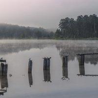 Утренний туман :: Сергей Цветков