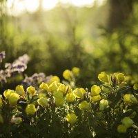Цветы и солнце :: Gotardo Ro
