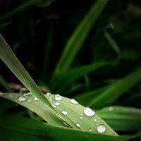 После дождя :: Serega