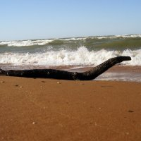 """Морской """"дракон"""". :: сергей лебедев"""