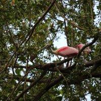 вот так на деревьях мы и живём :: Naum