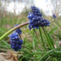 Весна в синем :: spm62 Baiakhcheva Svetlana