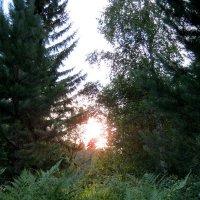 Последние лучи уходящего дня... :: Любовь Иванова