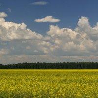 Июльские небо и поле :: Михаил Полыгалов