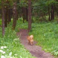 А лес стоит загадочный... :: Татьяна Помогалова