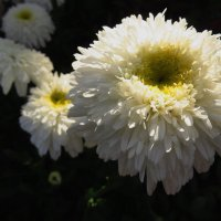 Не лесные цветы :: Андрей Лукьянов