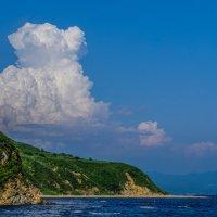 Щенок, смотрящий в небо... :: Арина