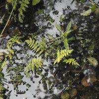 краски леса 1 :: Геннадий Свистов