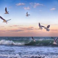 Чайки и море :: Виктор Мороз