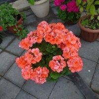 Цветы на клумбе :: Наиля