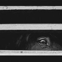 Лошадь :: Ксения Закружных