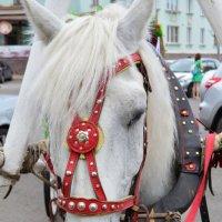 лошадь :: Вадим Басов
