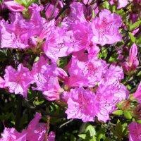 цветы :: Ольга Романова