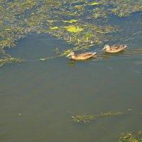 А рядом рыбка проплывала))) :: Alyes Kukharev