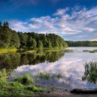 Лесной закат.. :: Андрей Войцехов