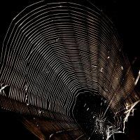 Всемирная паутина :: Alexander Andronik